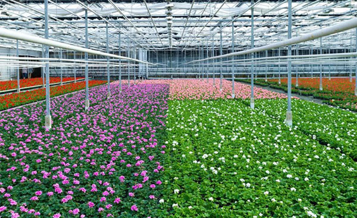onitoreo de horticultura agrícola