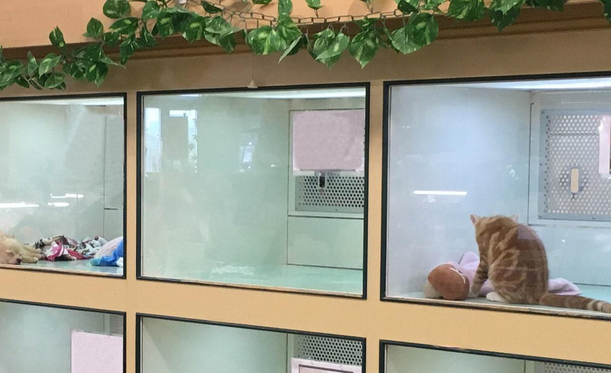 Surveillance agricole - Elevage d'animaux