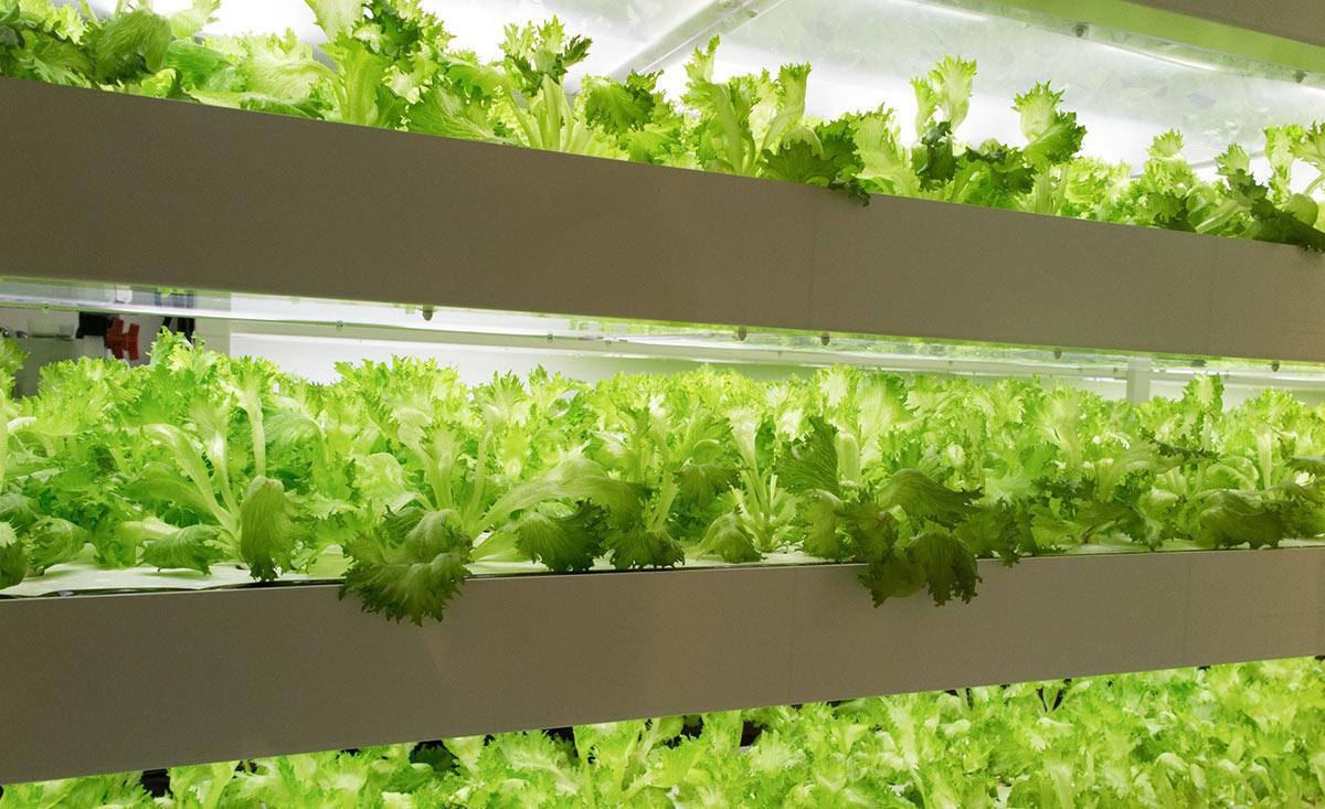 Surveillance agricole - Horticulture